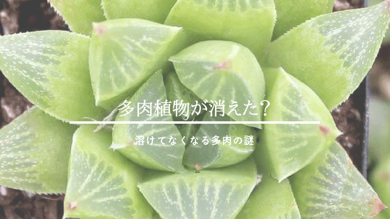 多肉植物が溶ける
