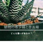 植物の普及種と希少種