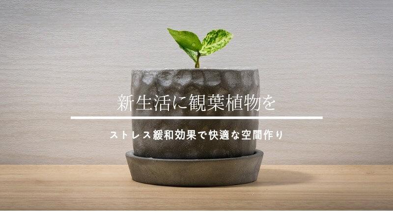 新生活と観葉植物