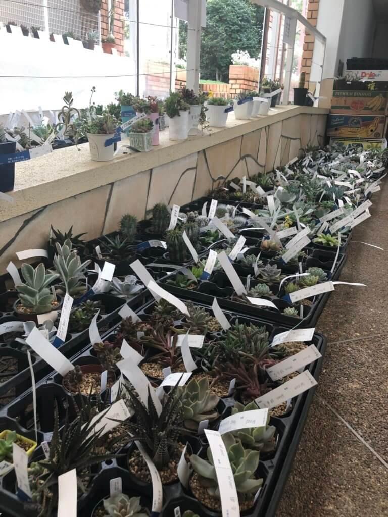 たくさんの多肉植物たち