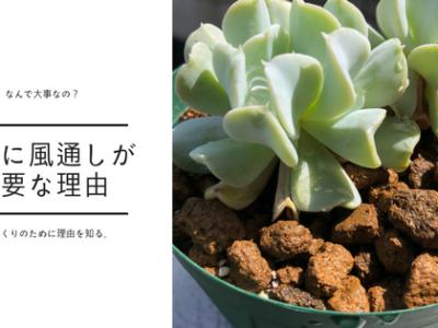 植物と風通しの関係