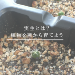 植物の実生とは