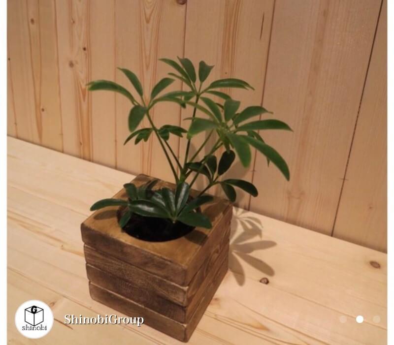 おしゃれな植木鉢