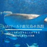 いおワールド鹿児島水族館・感想