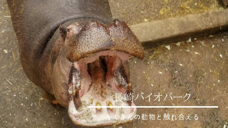 長崎バイオパーク|カピバラやカンガルーにふれあえる最高の動物園